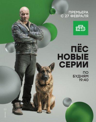 Пёс 4 сезон (2018) сериал